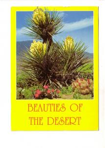 Beauties of the Desert, Yucca, Beavertail and Strawberry Hedgehog Cacti, Petley