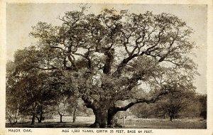 Major Oak Tree