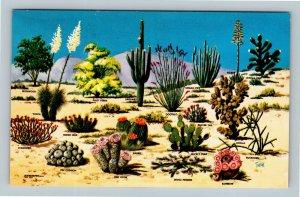 Cacti & Desert Flora Of The Great Southwest, Chrome Postcard