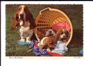 Hound Dog and Puppies in a Basket