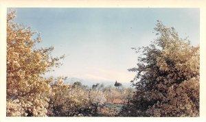 Mt Hermon 9,232 Ft Elevation, Non Postcard Backing Shuturah, Lebanon writing ...