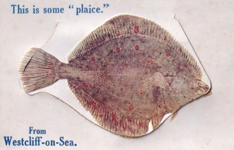 Plaice Fish At Westcliffe On Sea Essex Mailing Novelty Old Postcard
