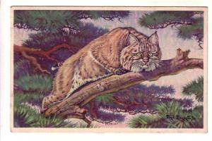 The Bobcat, Lynx, America's Wildlife Resources, Restore, Protect, Conserve, N...