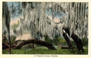 FL - A Tropical Scene