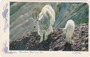 Mountain Goat and Kid, Canada , 40-60s