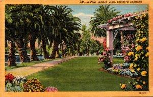 California A Palm Shaded Walk In Southern California Curteich