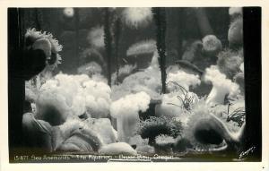Depoe Bay Oregon~Aquarium~Sea Anemones~1940s Real Photo Postcard~RPPC