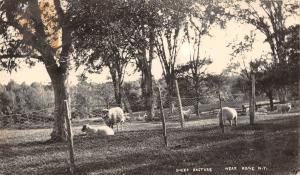 ROME NEW YORK SHEEP PASTURE REAL PHOTO POSTCARD c1913