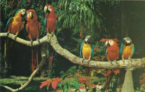 Florida Miami Colorful Macaws Parrot Jungle Red Road