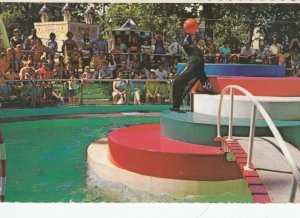 MONTREAL, Quebec, Canada, PU-1987; Children's Zoo, Seal balancing a red ball