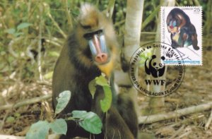 Mandrill Baboon Ape Republica De Guinea Stamp FDC Postcard