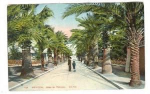 Allee De Palmiers, Menton (Alpes-Maritimes), France, 1900-1910s