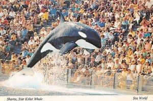 Shamu, Star Killer Whale Sea World Fishing Unused