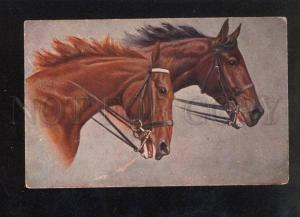 033058 Heads of Breed HORSES Race  Vintage T.S.N. postcard