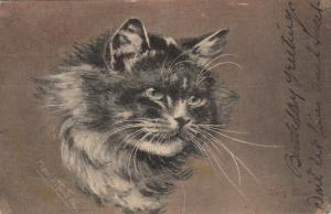 AS: Muriel Hunt, PU-1906; Portrait of Fluffy Grey Cat, Very Wise