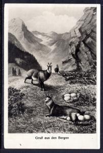 Gruss Aus,Bergen,Switzerland,Goats