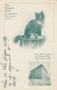 PORTLAND , Maine , 1907 ; New Falmouth Hotel & Pet Cat