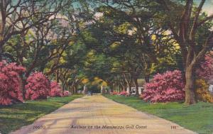 Azaleas On The Mississippi Gulf Coast Mississippi 1952