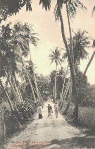 Ceylon A Bye Path between Coconut Palms Colombo 02.96