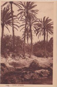 Algeria Dans L'Oasis