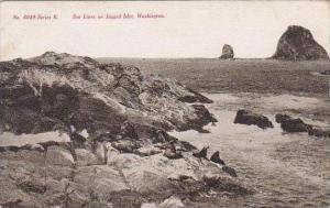 Washington Sea Lions On Jagged Islet