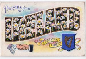 Daisies from Ireland