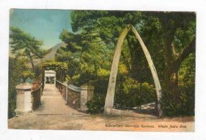 Alameda Gardens,Whale Jaw's Arch,Gibraltar,1900-10s