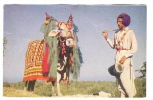 The Clairvoyant Bull, India, 1940-1960s