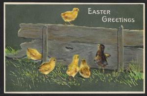 Easter Greetings Chicks at a Board Used c1908
