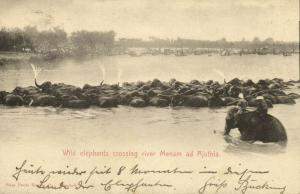 siam thailand, Wild Elephants crossing River Menam ad Ajuthia (1899) Postcard