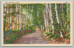 Maine~Scenic View~Silver Birches And Flowers Line Long Dirt Road~Linen PC