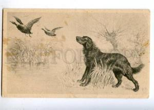 160725 Duck HUNT Dog SETTER by WH Vintage VIENNE PC