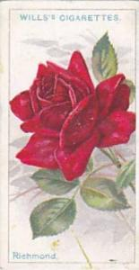 Wills Vintage Cigarette Card Roses A Series 1912 No 19 Richmond