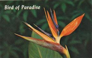 Hawaii Honolulu Bird Of Paradise