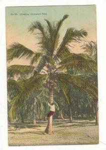Man Climbing a Cocoanut Tree, Jamaica, 00-10s