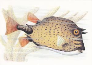 São Tomé and Príncipe , Fish Postcard , 50-70s #5