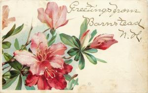 Barnstead New Hampshire~Hot Pink Tropical Lilies~Gold Leaf Greetings~1909 PC