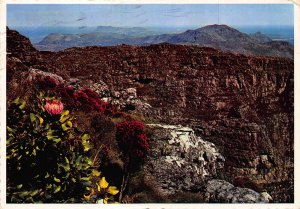 Cape Town South Africa Table Mountain Landscape Postcard