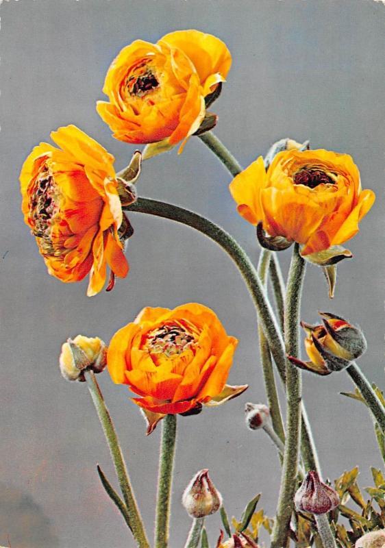 Blumen Fleurs Yellow Flowers
