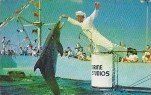 Florida Marineland Hand Feeding Jumping Porpoises Marine Studios