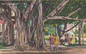 Florida Trees The Banyan Tree