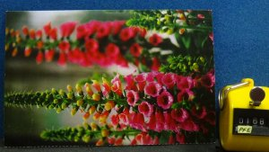 Continental Flowers Postcard Thinner Paper Likely From a Magazine Unposted