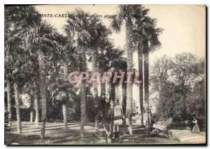 Old Postcard Monte Carlo giants Palms