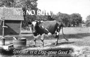 Spooner WI is a Dog-Gone Good Town~That Ain't No Bull RPPC 1946