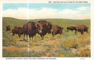 Buffalo on the Plains Buffalo Unused