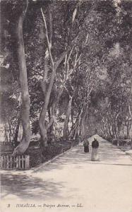 Tree-lined, Poirpre Avenue, Ismalia, Egypt, 10-20s