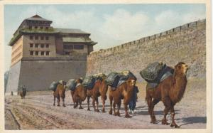 PEKING , CHINA , 1900-10s ; Camel Train