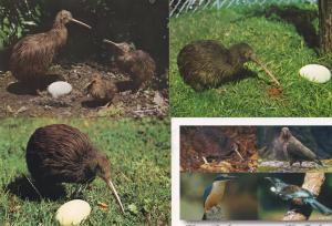 Kiwi & Egg 4x New Zealand Bird Postcard s