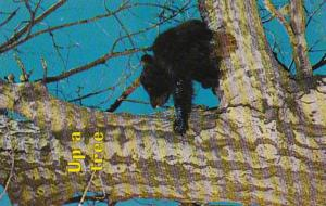 Black Bear Up A Tree Another Fine Mess You Got Me Into