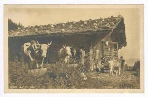 RP  Auf der Alp, Dairy cows, house & workers, Wehrliverlag Kilchberg (Zch), S...